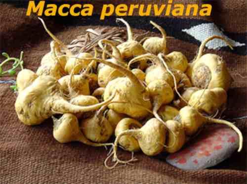 macca peruviana
