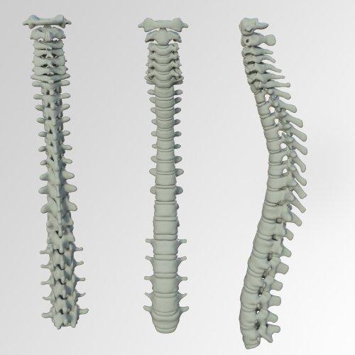 patologie schiena