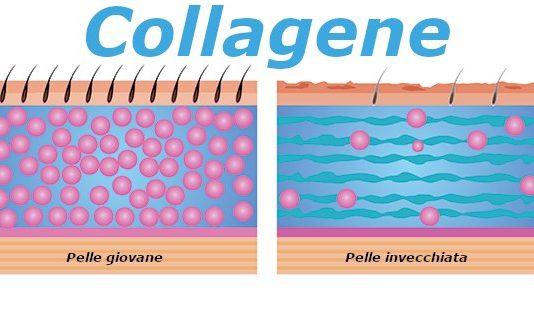 collagene proprietà e dove si trova