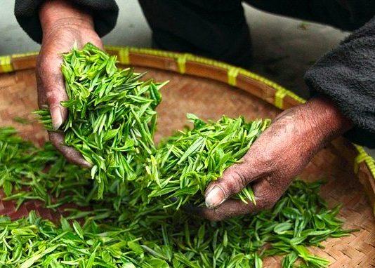 tè verde proprietà e benefici